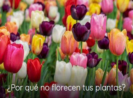 plantas que no florecen