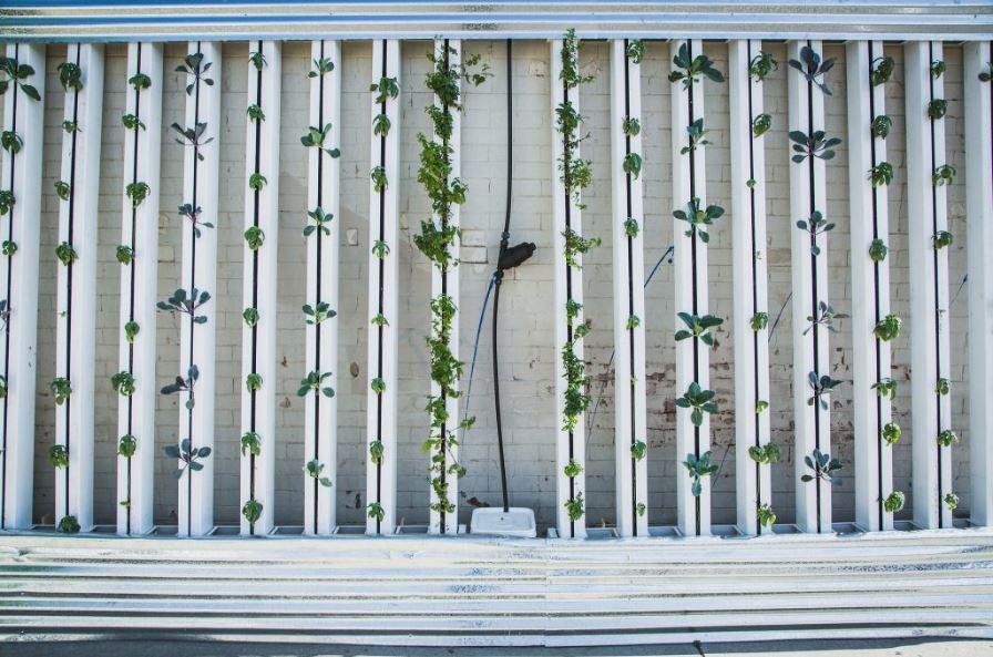jardin en una pared