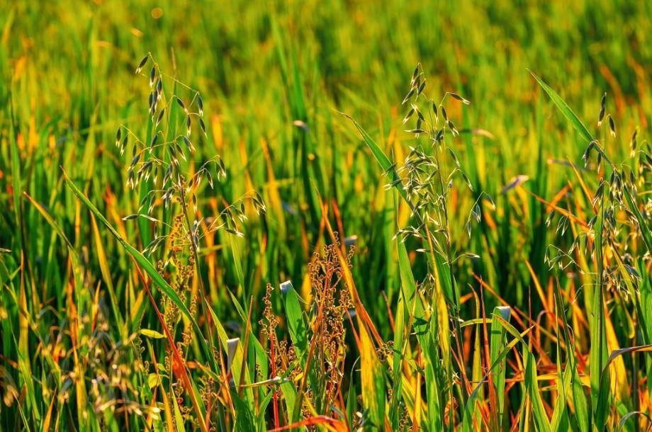 quitar hierbas malas