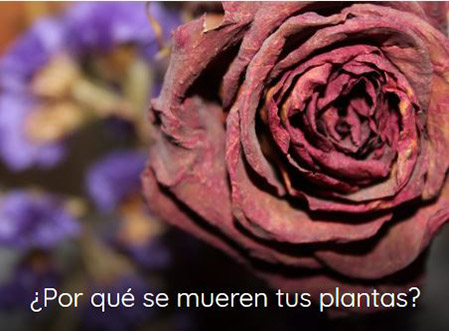 plantas muertas
