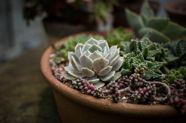 cactus comprar