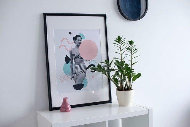plantas sin cuidados